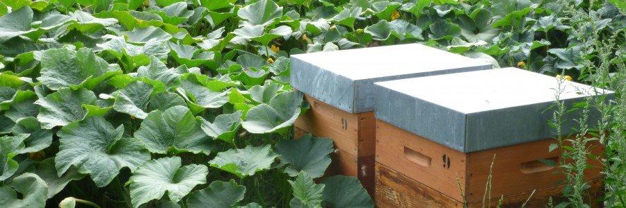 Les abeilles sur la ferme
