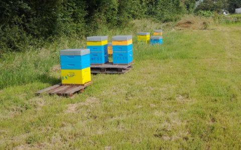 Des ruches à la ferme